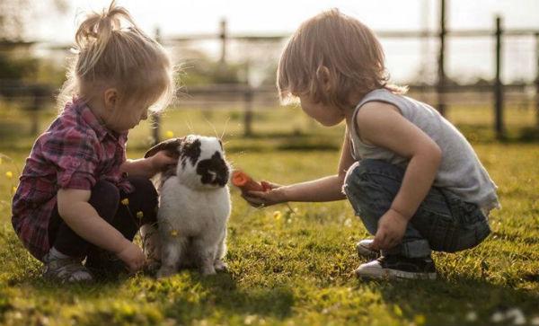 Nuôi thú cưng là một cách hiệu quả bồi dưỡng lòng nhân ái cho trẻ